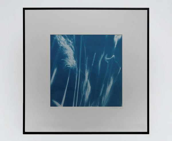 Picture of Cyanotype Refª. CNT 010
