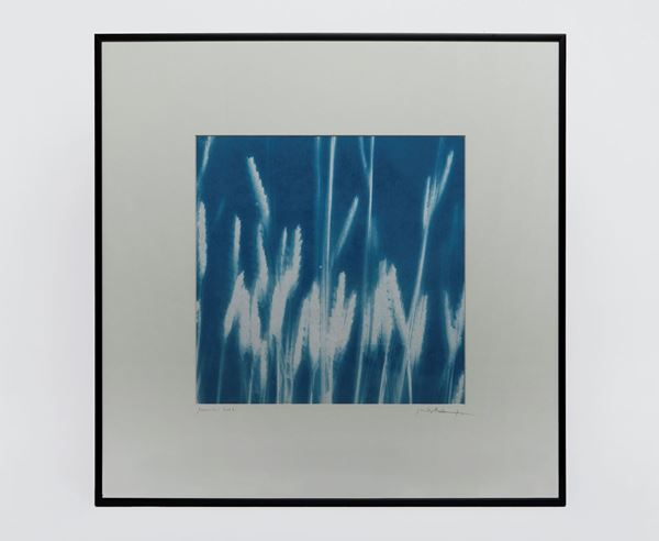 Picture of Cyanotype Refª. CNT 011