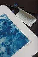 Picture of Cyanotypes