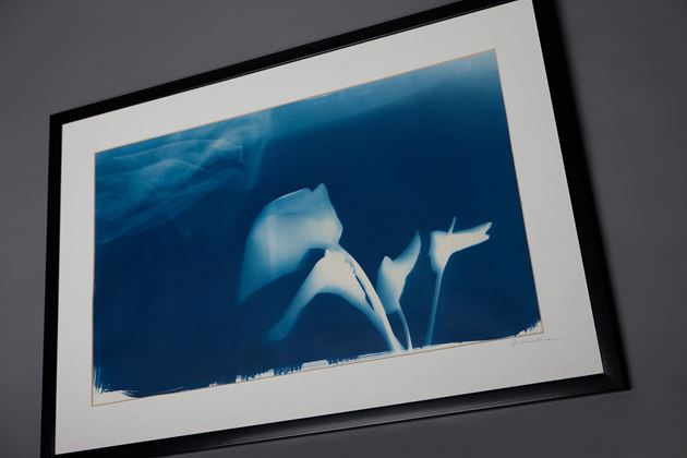 Picture for category Cyanotype Impressions