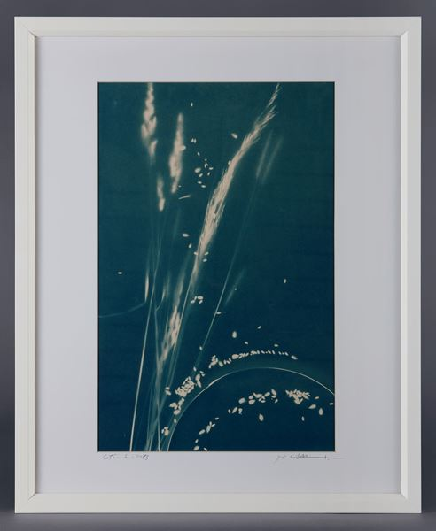 Picture of Cyanotype Refª. CNT 006