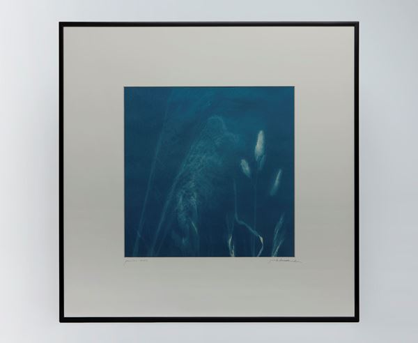 Picture of Cyanotype Refª. CNT 007