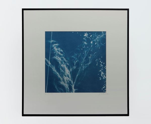 Picture of Cyanotype Refª. CNT 008