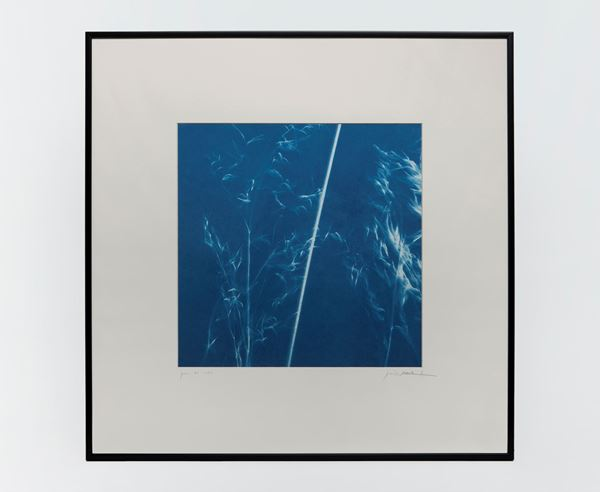 Picture of Cyanotype Refª. CNT 009