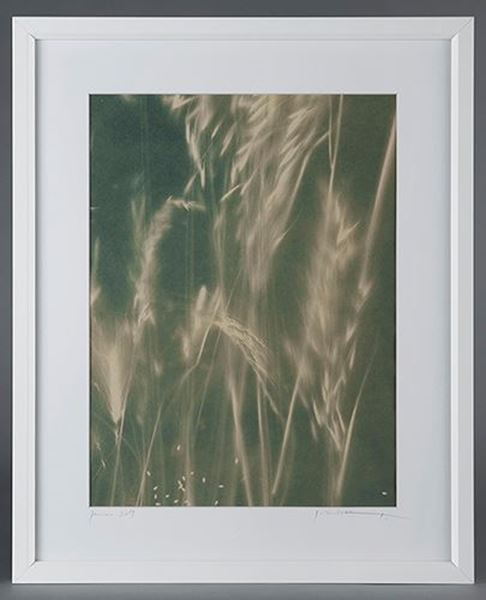 Picture of Cyanotype Refª. CNT 002